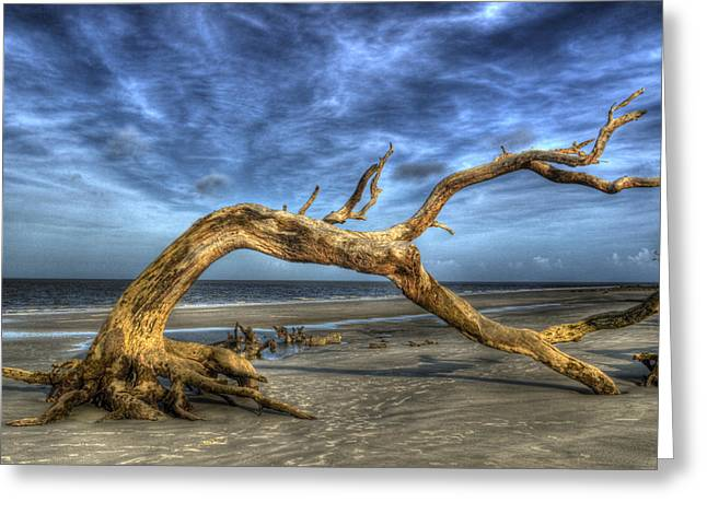 Wind Bent Driftwood Greeting Card by Greg and Chrystal Mimbs