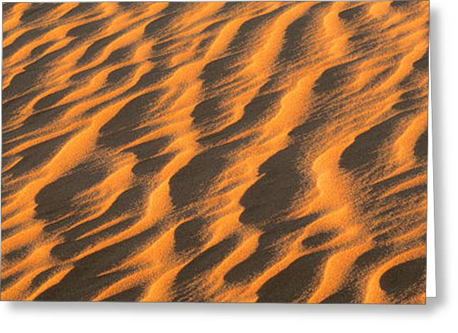 Wind Blown Sand Tx Usa Greeting Card by Panoramic Images