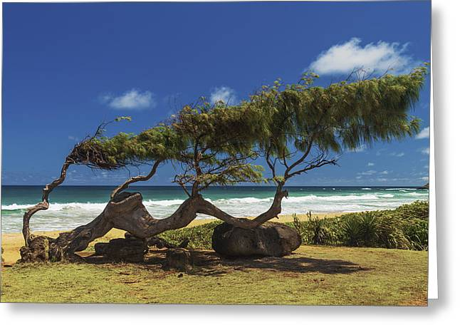 Blue Sky And Sand Greeting Cards - Wind Blown Tree Greeting Card by Brian Harig