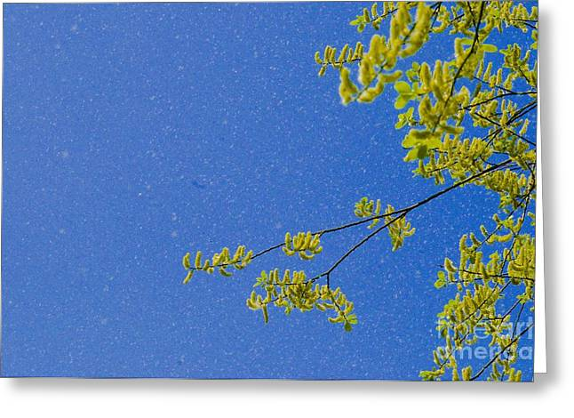 Spring Fever Greeting Cards - Wind Dispersal Of Pollen Greeting Card by Thierry Berrod, Mona Lisa Production/ Science Photo Library