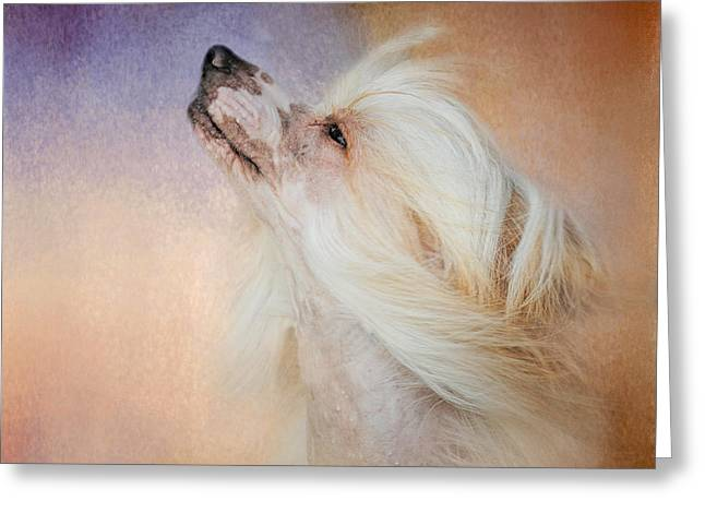 Dog Photo Greeting Cards - Wind In Her Hair - Chinese Crested Hairless Greeting Card by Jai Johnson