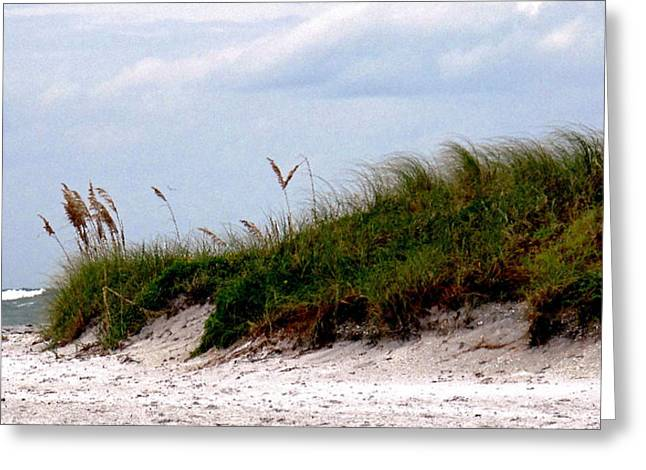 Wind in the Seagrass Greeting Card by Ian  MacDonald