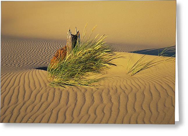 Wind Makes Ripples In The Sand Greeting Card by Robert L. Potts