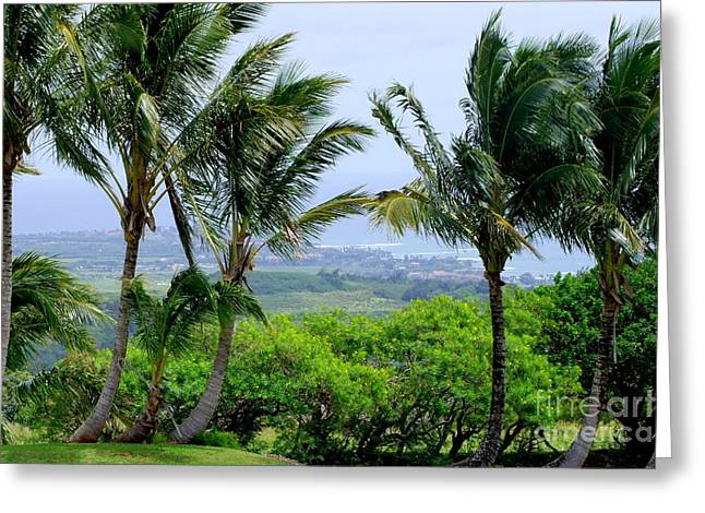 Wind Over Kalaheo Greeting Card by Mary Deal