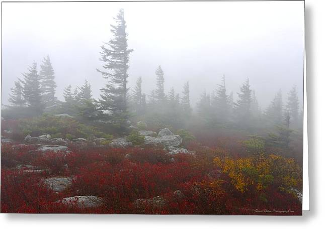 Wind Swept Pines Amongst The Foggy Mist Greeting Card by Daniel Behm