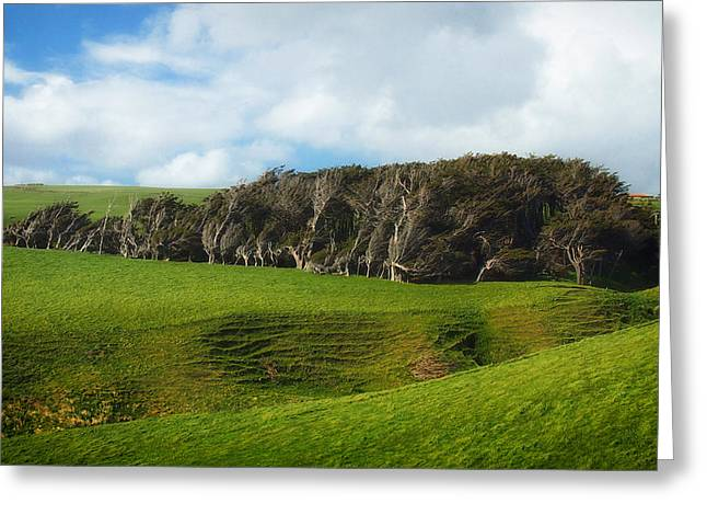 Unique Sights Greeting Cards - Wind Swept Trees of New Zealand Greeting Card by Mountain Dreams