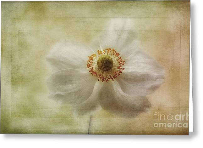 Close Focus Floral Greeting Cards - Windblown Greeting Card by John Edwards