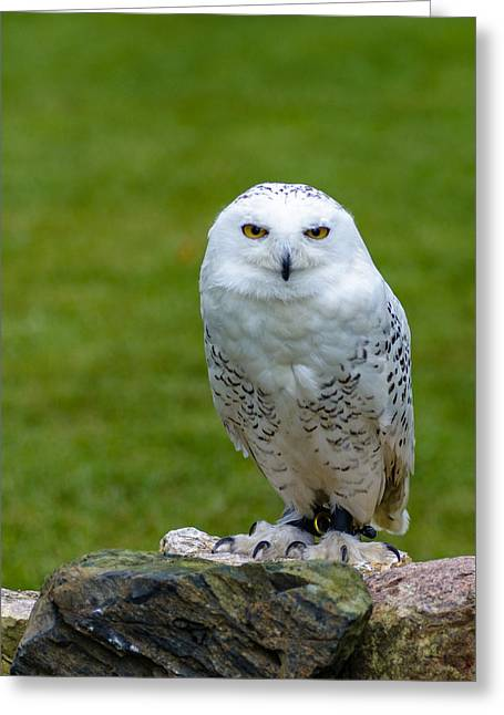 Nature Center Greeting Cards - Windchill McCloud Greeting Card by Randy Scherkenbach