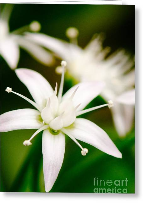 Plants Photographs Greeting Cards - WINDFALL STAR PT Jade plant friendship tree money plant Greeting Card by Andy Smy