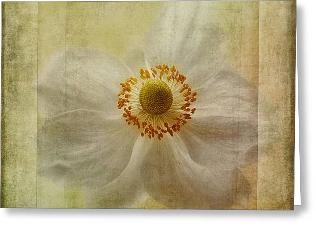 Close Focus Floral Greeting Cards - Windflower Textures Greeting Card by John Edwards