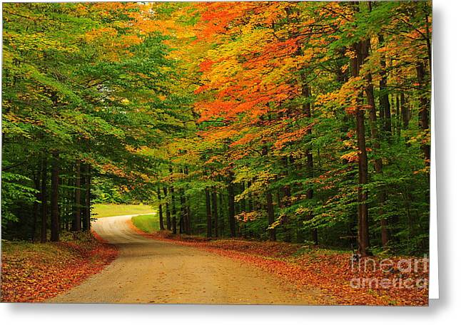 Fall Trees Greeting Cards - Winding Autumn Road Greeting Card by Terri Gostola