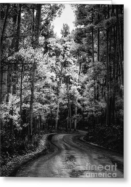 Back Road Greeting Cards - Winding Forest Road Greeting Card by The Forests Edge Photography - Diane Sandoval