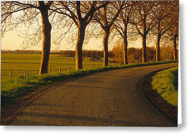 Tree Lines Greeting Cards - Winding Road, Trees, Oudendijk Greeting Card by Panoramic Images