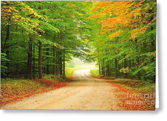 Fallen Leaves Greeting Cards - Winding Through Autumn Greeting Card by Terri Gostola