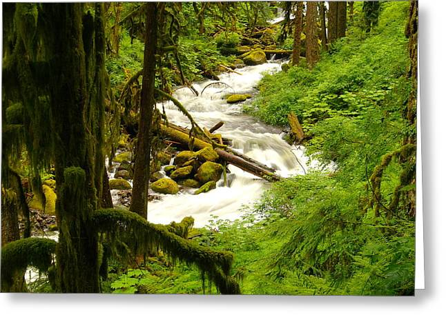 Water In Creek Greeting Cards - Winding Through The Rain Forest Greeting Card by Jeff  Swan