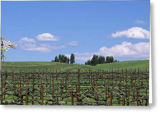 Windmill In A Vineyard, Napa County Greeting Card by Panoramic Images
