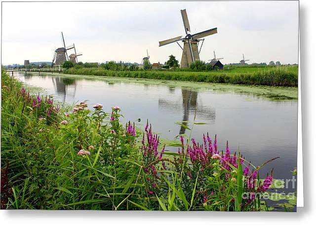 Windmills Of Kinderdijk With Wildflowers Greeting Card by Carol Groenen