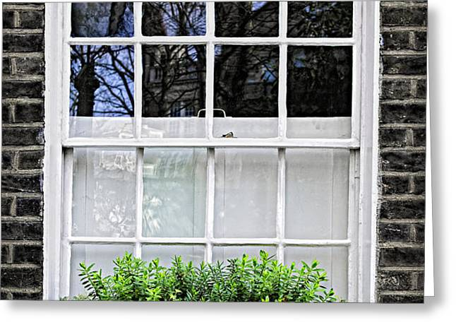 Window in London Greeting Card by Elena Elisseeva