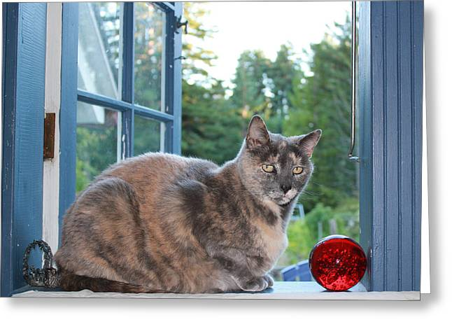 Photos With Red Greeting Cards - Window Sill Cat with Red Glass Ball Greeting Card by Ron McMath