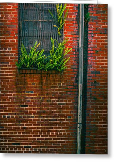 Ybor City Greeting Cards - Window Weeds Greeting Card by Ybor Photography