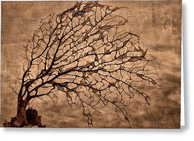 Bare Tree Greeting Cards - Windowpane Coral Greeting Card by Carol Leigh