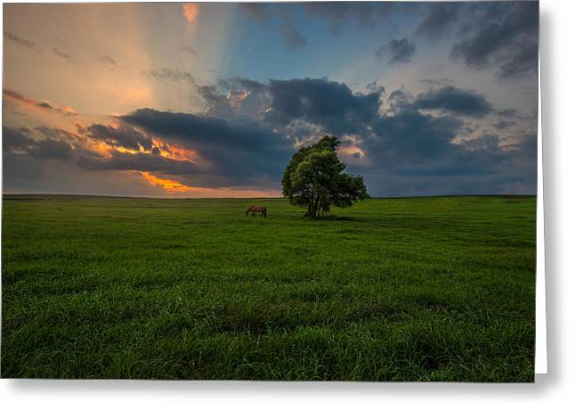 Lone Horse Photographs Greeting Cards - Windows SD Greeting Card by Aaron J Groen