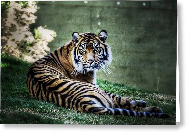 Tigris Greeting Cards - Windows to My Soul Greeting Card by Saija  Lehtonen