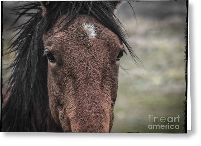 Windows To The Soul Greeting Card by Mitch Shindelbower