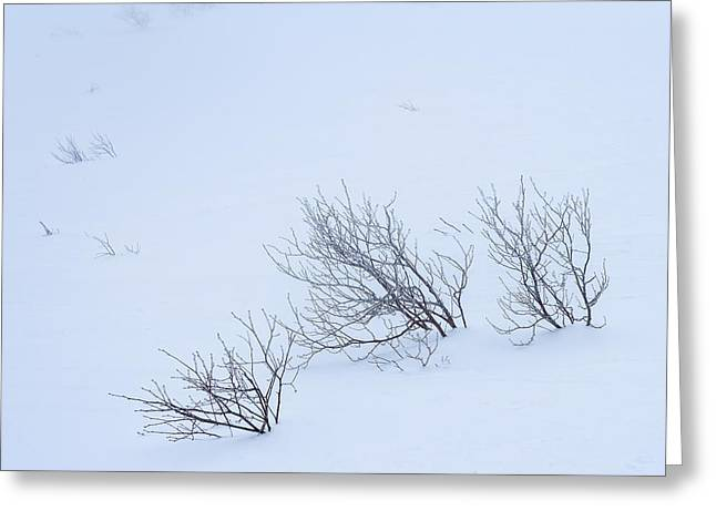 Mountains In Winter Greeting Cards - Windswept Greeting Card by Jeff Sinon