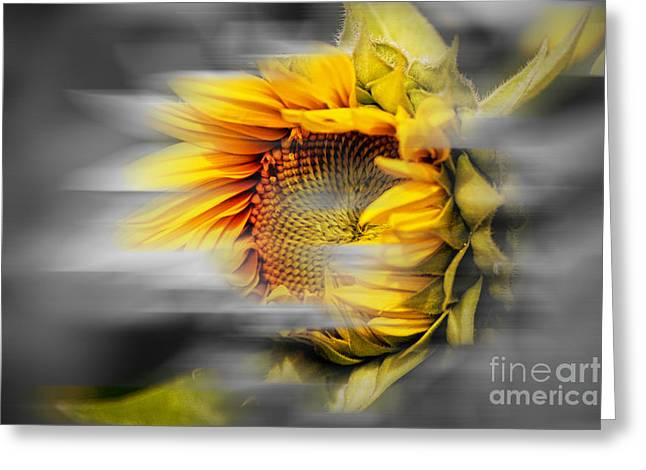 Floral Digital Art Greeting Cards - Windswept Greeting Card by K Hines