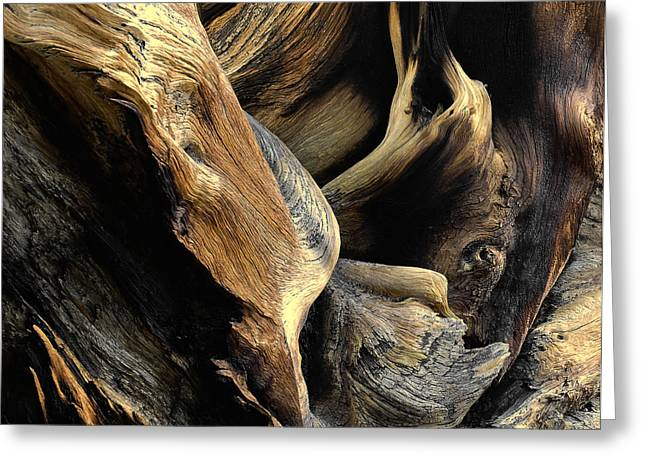 Windswept Roots Greeting Card by The Forests Edge Photography - Diane Sandoval