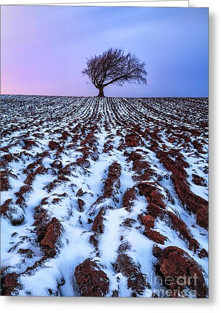 Fresh Snow Greeting Cards - Windswept Tree Scotland Greeting Card by John Farnan