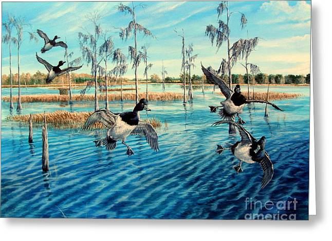 Recently Sold -  - Hunting Bird Greeting Cards - Lake Okeechobee - Ringed neck Ducks Greeting Card by Daniel Butler