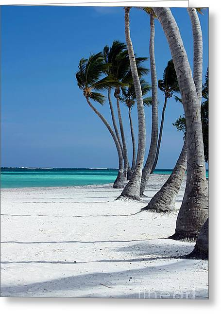 Sophie Vigneault Greeting Cards - Windy Paradise Greeting Card by Sophie Vigneault