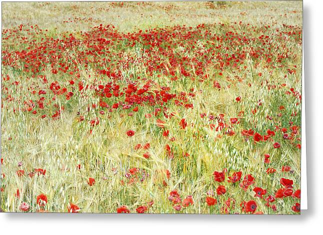 Windy Poppies At The Fields Greeting Card by Guido Montanes Castillo