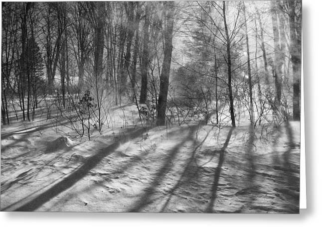 Blowing Snow Greeting Cards - Windy Winter BW Greeting Card by Karol  Livote
