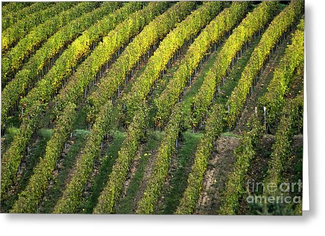 Wine Scene Greeting Cards - Wine acreage in Germany Greeting Card by Heiko Koehrer-Wagner