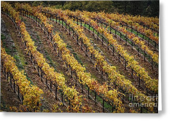 Vintner Greeting Cards - Wine Country Autumn Greeting Card by Mitch Shindelbower