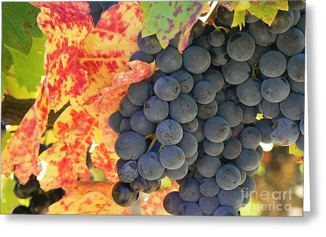 Wine Country Greeting Card by France  Art