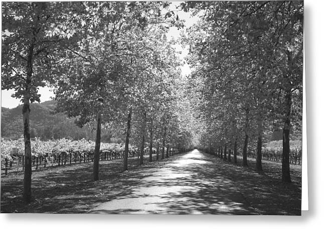 Northern California Landscapes Greeting Cards - Wine Country Napa black and white Greeting Card by Suzanne Gaff