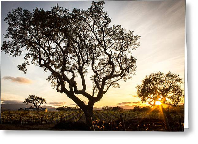 Vinter Greeting Cards - Wine Country Sunset Greeting Card by Richard Cheski