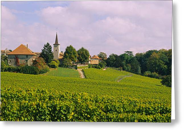 Wine Photography Greeting Cards - Wine Country With Buildings Greeting Card by Panoramic Images