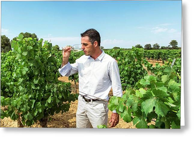 Wine Expert In A Vineyard Greeting Card by Philippe Psaila