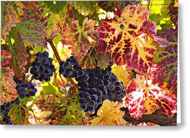Grapevine Photographs Greeting Cards - Wine grapes Cabernet Franc Greeting Card by Garry Gay