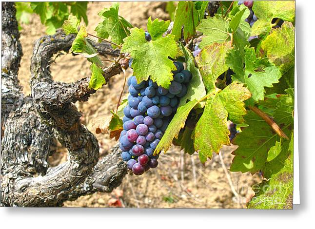 Wine Grapes Mixed Media Greeting Cards - Wine Grapes I Greeting Card by Shari Warren
