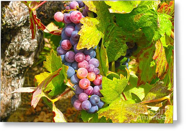 Wine Grapes Mixed Media Greeting Cards - Wine Grapes II Greeting Card by Shari Warren
