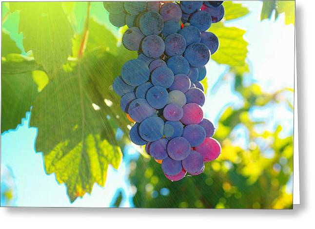 Wine grapes  Greeting Card by Jeff  Swan