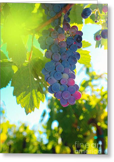 Blue Grapes Greeting Cards - Wine grapes  Greeting Card by Jeff  Swan