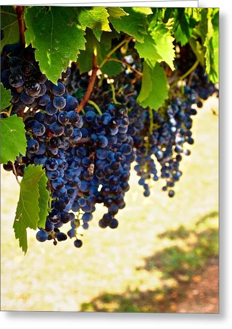 Fruit And Wine Greeting Cards - Wine Grapes Greeting Card by Kristina Deane