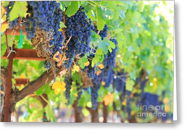 Red Wine Prints Greeting Cards - Wine Grapes Greeting Card by Mariusz Blach